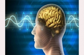 Brain Can Learn Continuously and Improve Memory